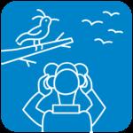 avistamiento aves