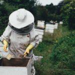apicultura hobby