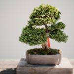 bonsai hobby