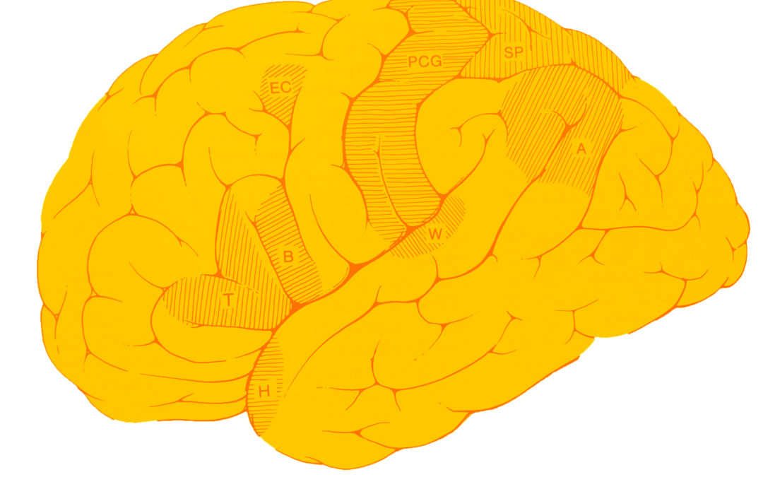 Hobbies en la prevención de demencia y Alzheimer (parte 2)