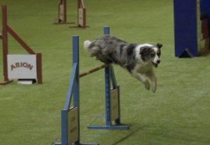 perros concursos hobby