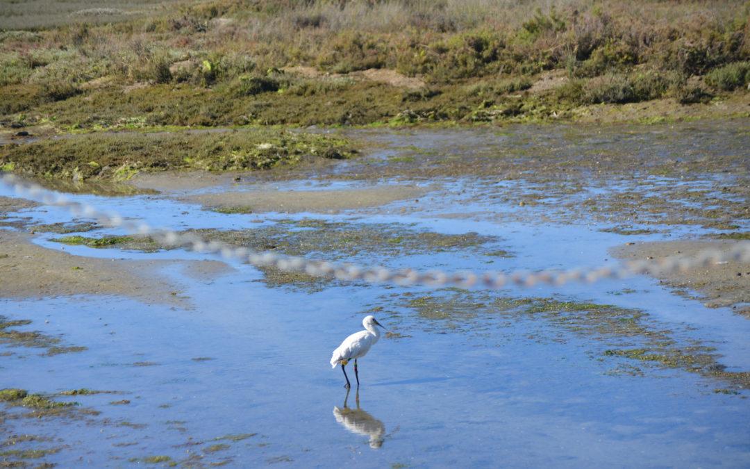 Hobbies y conservación de la naturaleza