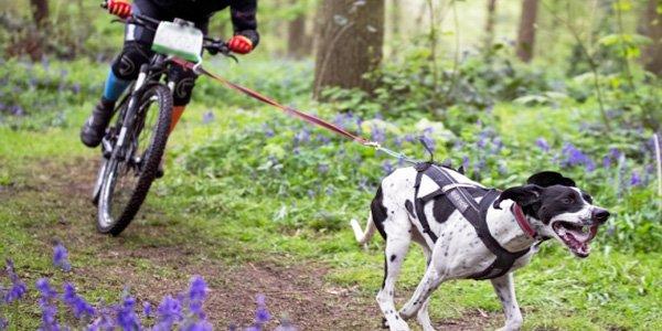 Hobbies deportivos con perros